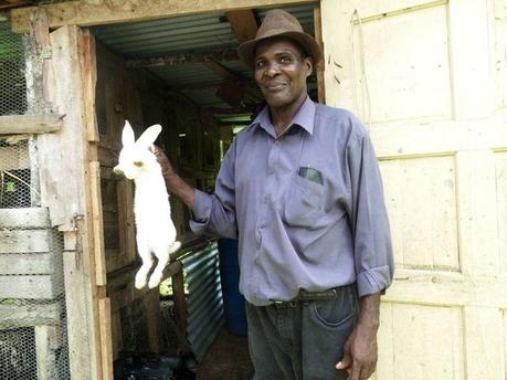 rabbits community